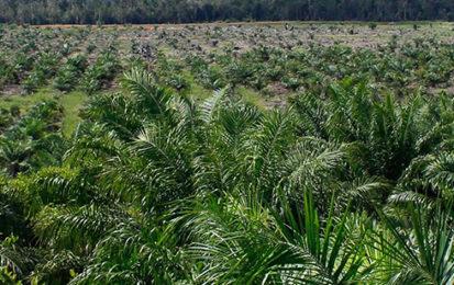 Pourquoi l'huile de palme n'est-elle pas vegan ?
